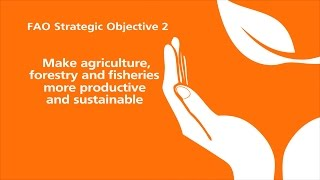 FAO Strategic Objective 2
