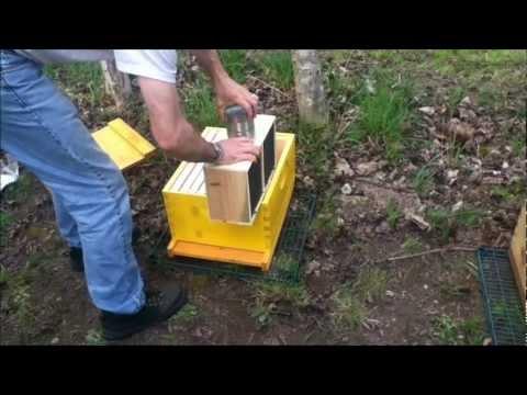 2012 Package Honey Bees