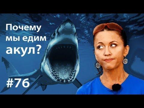 Почему мы едим акул? (18+)