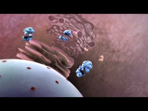 Un gran video que explica la actividad de los virus en el cuerpo humano