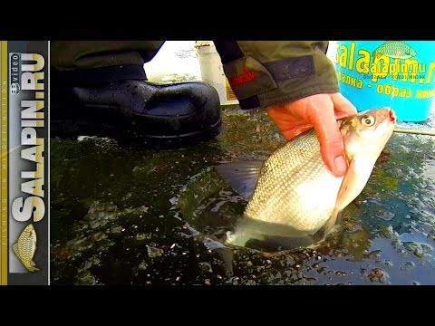 видео плотва иваньковское водохранилище