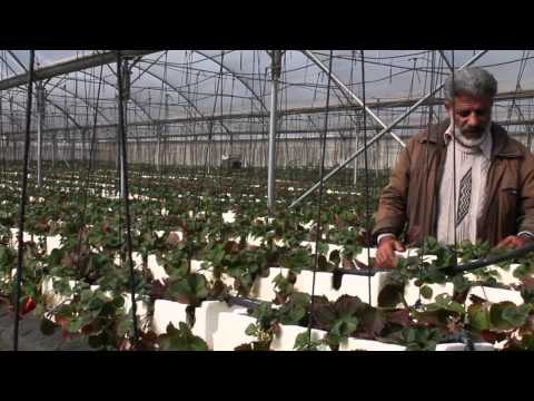 Shifting to High Value Crops