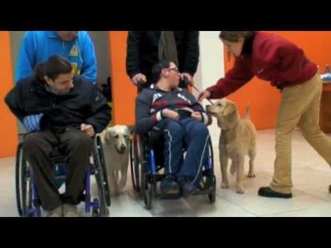 il cane, un aiuto per i disabili