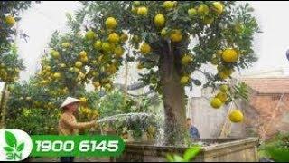Trồng trọt | Xử lý nước giếng khoan để tưới cho cây trồng