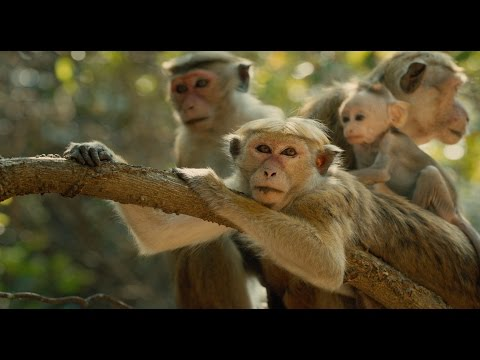 Monkey Kingdom (Trailer)