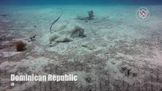 Stingrays at El Peñon - Slow Motion