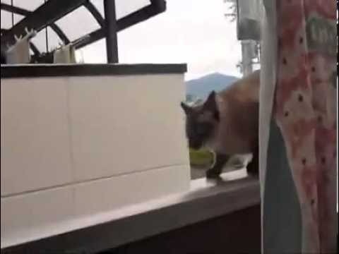 A Cat Jumps In His Death