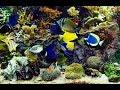 ✔ Beautiful Real Colourful Marine Fish Aquarium! (29:00) Relaxing Natural Sounds~Nice HD