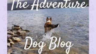 Hiking With Dogs: Tips & Trail Etiquette