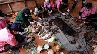 Nonton 40 Dead Tiger Cubs Discovered In Freezer At Temple Following Raid Film Subtitle Indonesia Streaming Movie Download