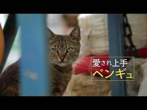 『猫が教えてくれたこと』【12/9~】