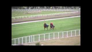 Te Aroha New Zealand  city images : Billie jean king race horse Te aroha New zealand.
