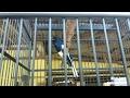 Download Lagu JHON Kacer aduhai isian lovebird Mp3 Free