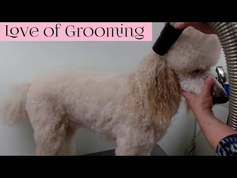 Drying Techniques - Cage/Crate/Kennel Drying - Stretch/Fluff Drying - Hi-Velocity Drying (видео)