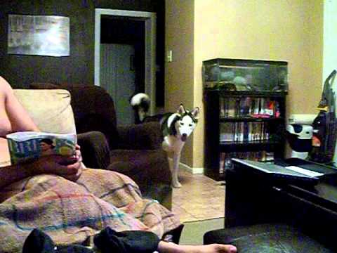 Dog Afraid Of Julia Roberts