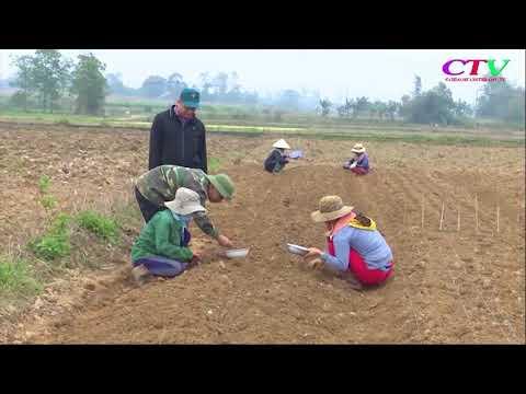 Chuyển đổi nhiều diện tích đất sang trồng cây dược liệu