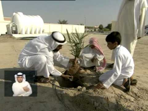 The General Authority of Islamic Affairs and Endowments is planting 2835 palm trees in the mosques of the western region