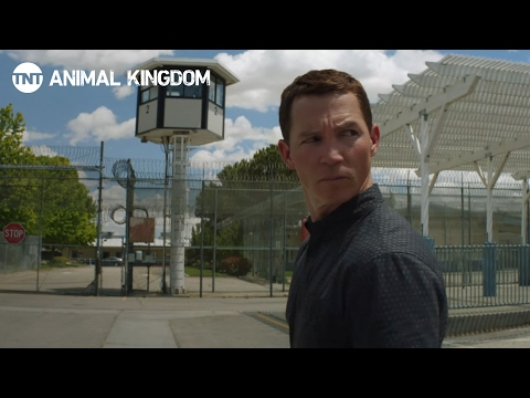 Animal Kingdom 1.06 (Preview)
