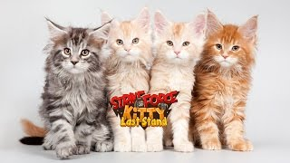 Видеообзор  StrikeForce Kitty 3: Last Stand