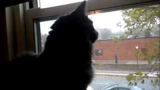A Cat's Eye View Of Hurricane Sandy.