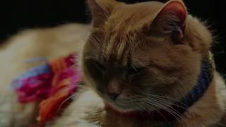 Nonton A Street Cat Named Bob   Big Issues   At Cinemas November 4 Film Subtitle Indonesia Streaming Movie Download