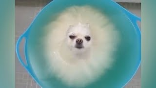 Video DO NOT play TRY NOT TO LAUGH, it's so HARD YOU WILL DIE TRYING! - Funniest ANIMAL videos MP3, 3GP, MP4, WEBM, AVI, FLV Maret 2018