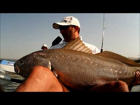 Pesca de kayak show VIDEO 10 Corvinas 25kg e 22kg