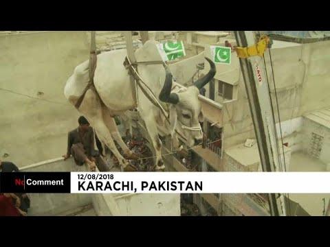 Πακιστάν: Προετοιμασίες για την Γιορτή της Θυσίας