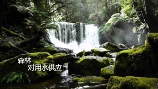 年国际森林日 2016