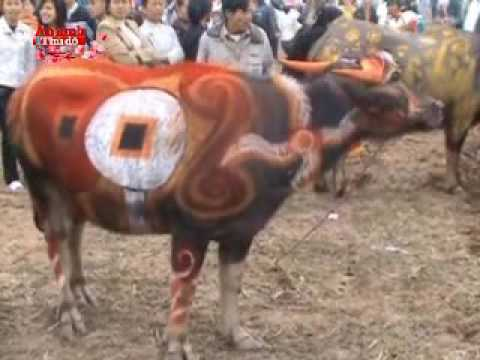 Lễ hội Tịch Điền (Vua đi cầy)
