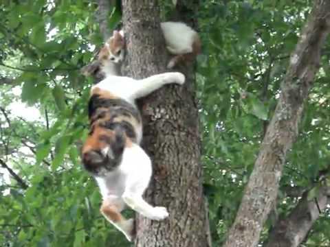 Кошка и котенок укотрый учится лазить