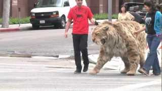 Saber-toothed cat struts down Wilshire Blvd in L.A. and comes home to the Tar Pits! full download video download mp3 download music download
