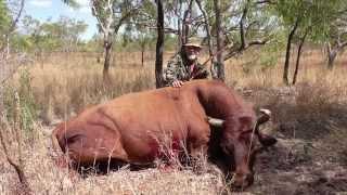 Video Australian Scrub Bull Traditional Bow Hunt MP3, 3GP, MP4, WEBM, AVI, FLV Agustus 2017
