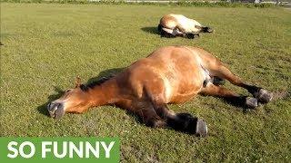 馬の「いびき」が大きいと…こんな音なのか!(動画)
