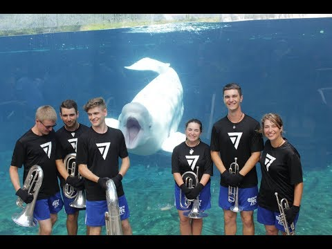Teenage Brass Ensemble Performs for a Very Appreciative Beluga Whale at the Mystic