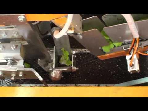 planteuse - Planteuse motte cubique sur film plastique.