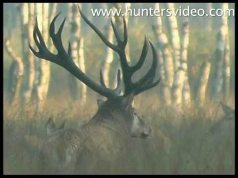 Monster Stags - Hunters Video