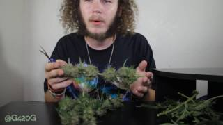 http://www.cropkingseeds.com/(SAVE 10%) Use code: G420G-10http://www.dormgrow.com/(SAVE 6%) Use code: G420G-Online Garden Supplies- (USE LINK & SAVE 5%)http://growace.com/user/grow420guide-CloneTek & Hydro/Soil Nutrients-http://www.skunklabshc.com/-RemoNutrientshttp://www.remonutrients.com/-OverGrowSociety T-SHIRTS-http://overgrowsociety.spreadshirt.com/✔ SUBSCRIBE ✔ LIKE ✔ COMMENT ✔ FAVORITE ✔ SHARE ✔Contact email: ogs.grow420guide@yahoo.comIntroMusic by: http://www.bensound.com/Song: ActionableOutroMusic by: https://machinimasound.com/Song: Ecstatic Wave