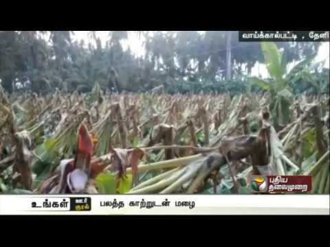 Heavy-rains-accompanied-with-gusty-winds-damage-plantain-trees-in-Theni