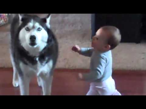 A Dog and a Baby Have a Real Conversation