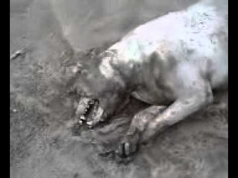 El huracán Irene dejó una extraña criatura en la playa de Long Beach