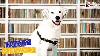 Dog Working at Library Gets A Promotion Party | The Dodo Party Animals by The Dodo