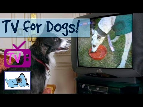 Video 6 Hours of The Best TV For Dogs Yet, Help with separation anxiety and learn how to stop barking download in MP3, 3GP, MP4, WEBM, AVI, FLV January 2017