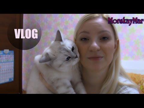 ВЛОГ: Куда делась кошечка Шелька, подарок на 14 февраля, покупки косметики