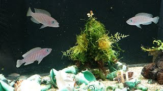 I made a Christmas tree for my fish by Rachel O'Leary