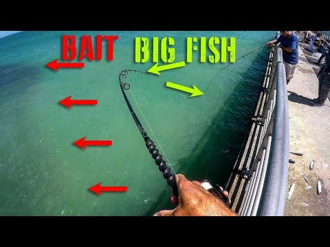 Video Non-Stop Fishing Action - Mullet Run Snooking/Redfish download in MP3, 3GP, MP4, WEBM, AVI, FLV January 2017