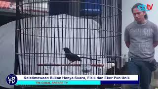 Video Inilah Kitaro, Murai Batu Yang Bikin Jokowi Kesengsem MP3, 3GP, MP4, WEBM, AVI, FLV Mei 2019