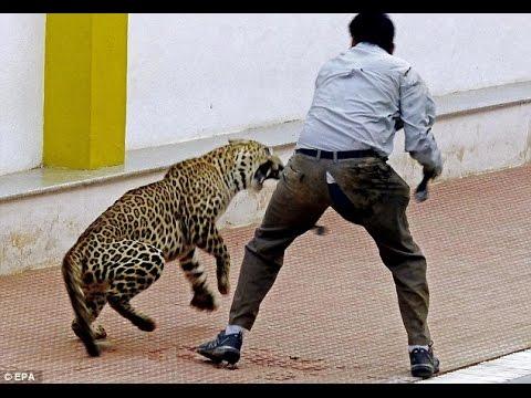 Leopardo ataca en escuela!!!