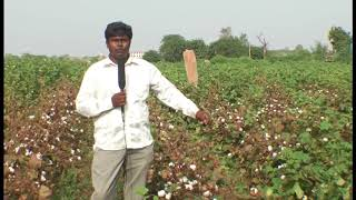 Cotton Farmer (Orgo)
