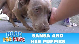 Kobieta pogłaskała bezpańskiego pitbulla. Ale nikt nie spodziewal sie tego, co stało się chwilę później.